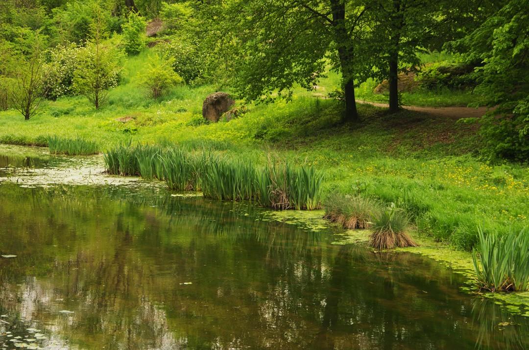 Renover Ou Supprimer Son Bassin De Jardin Creation