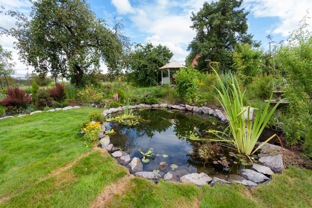 bassin jardin professionnel