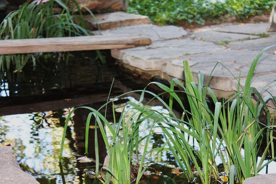 faire bassin jardin