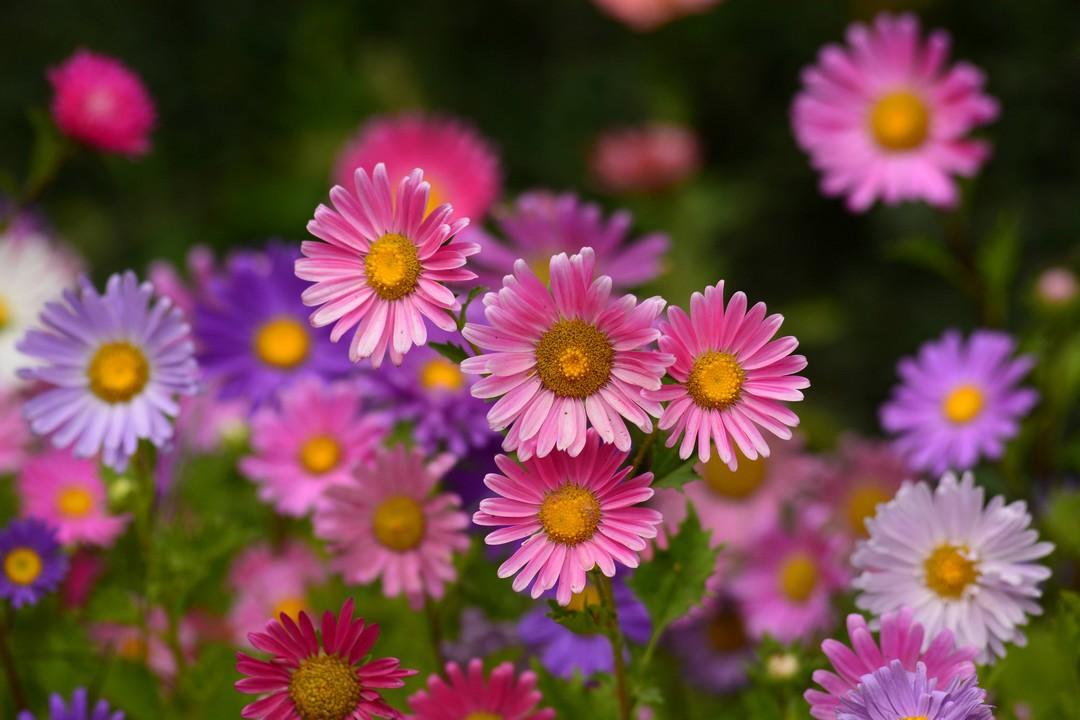 fleurs anti-nuisibles