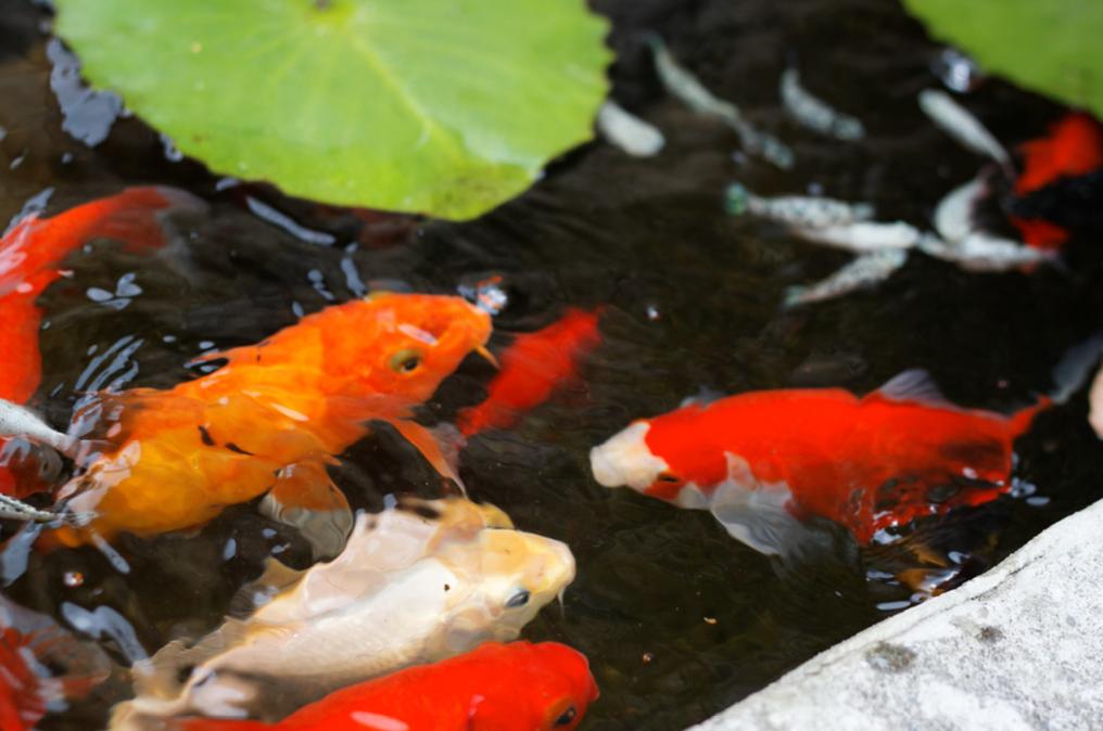 poissons bassin